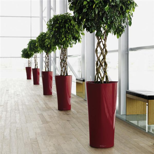 常见绿植租赁:榕树盆景