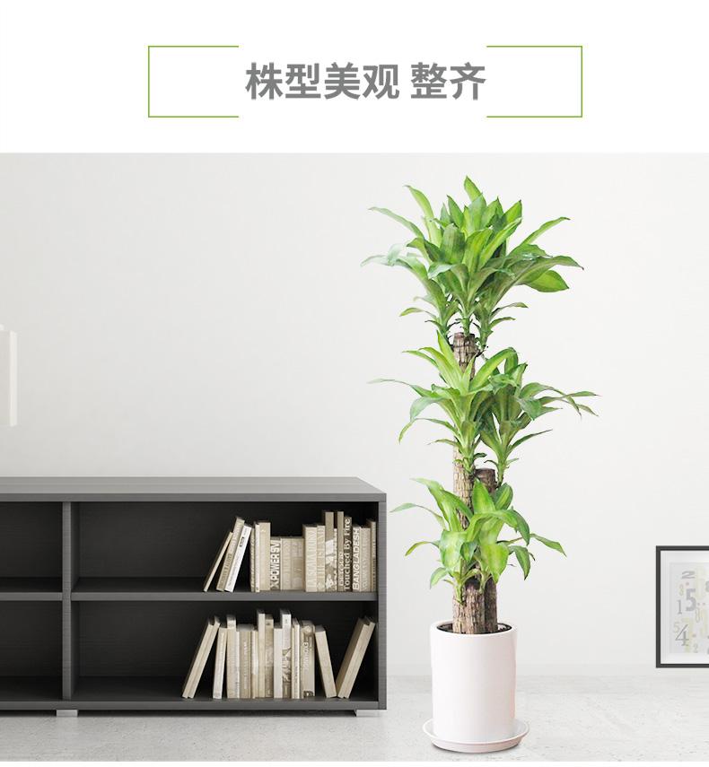 办公室绿植租赁的必要性